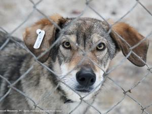 Нижегородский опыт работы с бездомными животными может быть тиражирован на общероссийском уровне