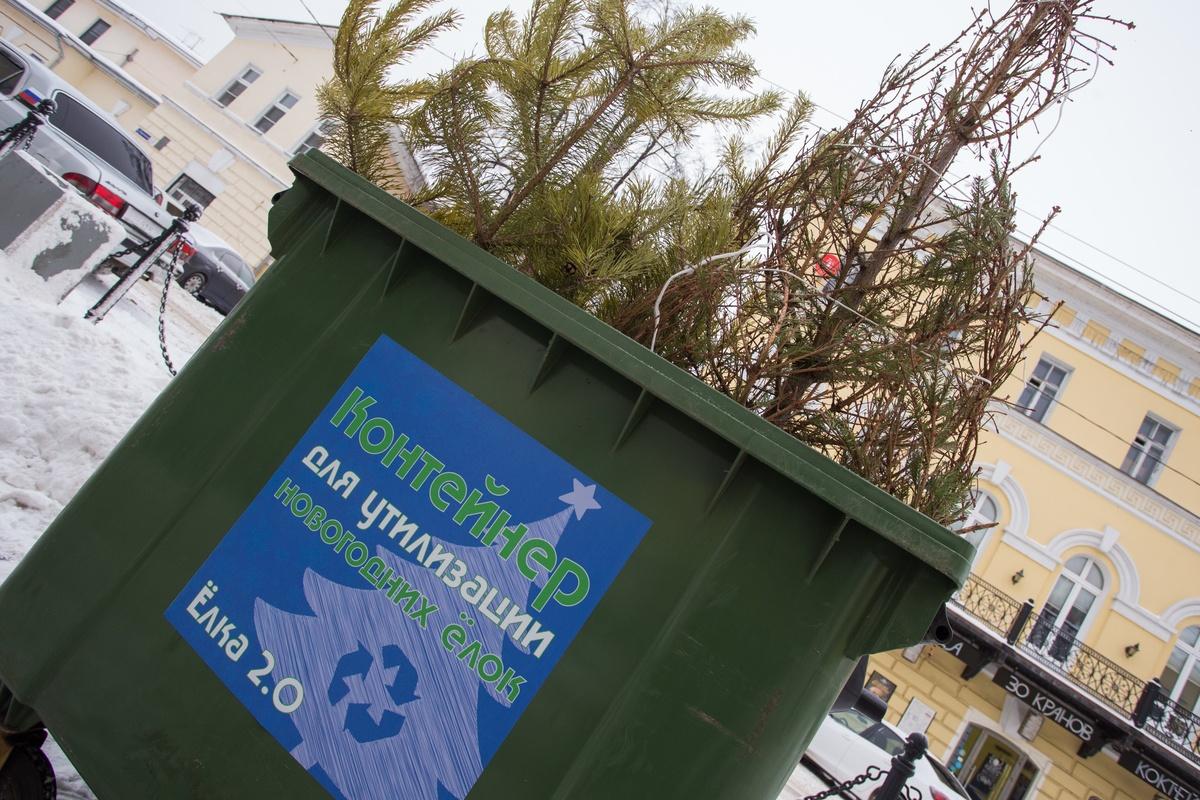 Сдать в утиль живые новогодние елки за приз предложили нижегородцам - фото 1